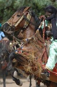 fulani horse rider- show jumping